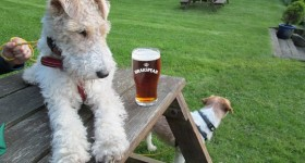 Brakspear launches 'Pooches in Pubs' campaign