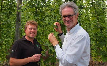 High Hopes for the hogs back brewery hop harvest