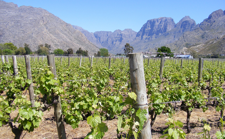 South Africa – The European Wine Buyer's Alternative?