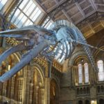 Natural History Museum releases 2018 supplier list