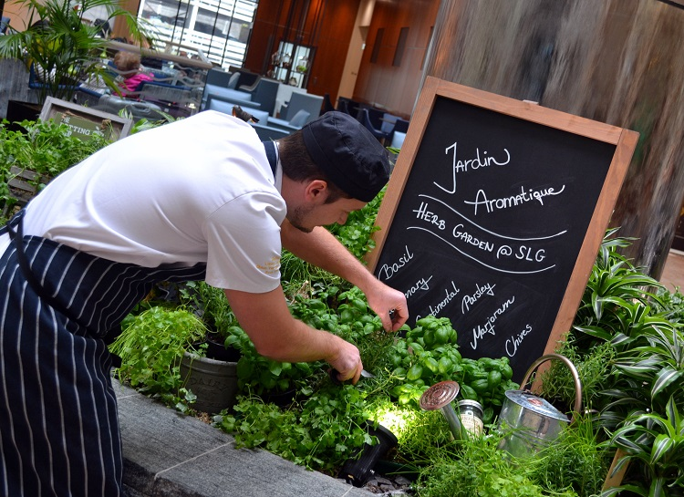 The Guests Love It As Gives Off A Fantastic Smell They Walk By And Team Really Enjoy Picking Fresh Herbs For Garnishing Dishes Making Herb