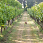 Danebury Vineyards celebrates 25 years