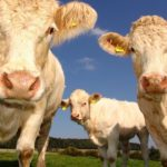 The Brighton Centre removes beef from menus as an issue of moral responsibility