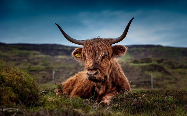 Oxford university beef ban